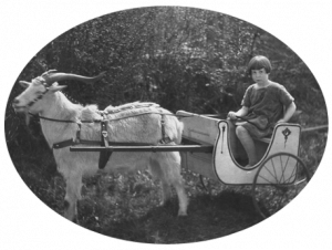 Girl with pixie cut driving a goatcart chariot
